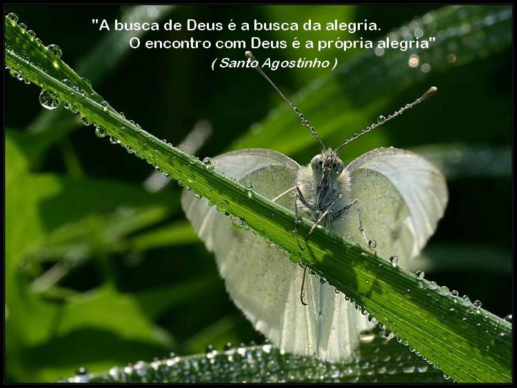 borboleta 10 santo agostinho image by FlaviusVersadus