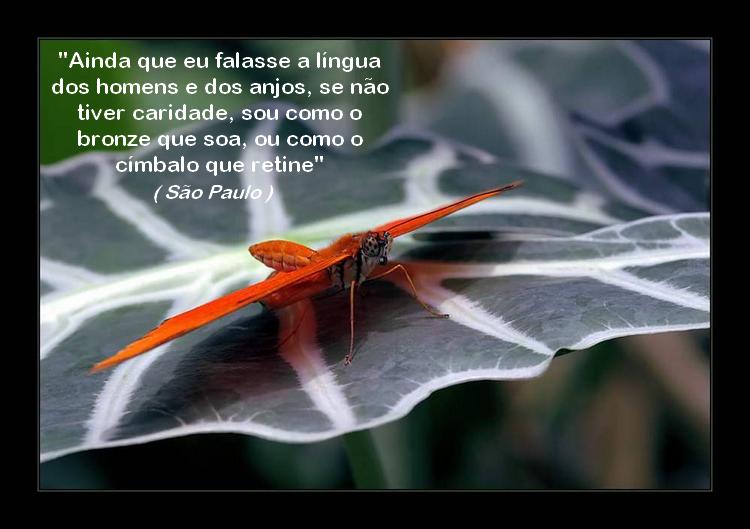borboleta 11 são paulo de tarso image by FlaviusVersadus