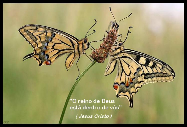 borboleta 22 jesus cristo by FlaviusVersadus