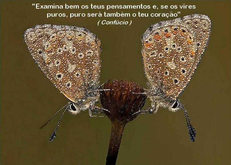 borboleta 8 confúcio image by FlaviusVersadus